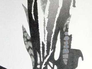 Carien Vugts, Sansevieria, drawing, tekening